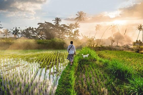 Grands Explorateurs (Bali, l'île de rêve)